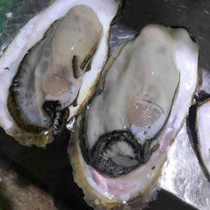 森町産牡蠣