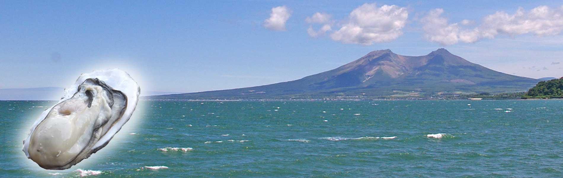 北海道噴火湾産の牡蠣